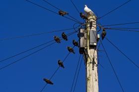 Linnud istuvad postil sinise taeva taustal
