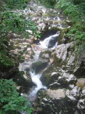Roheliste puudega ümbritsetud juga mägedes