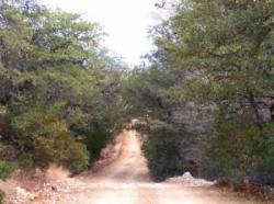 Kollakas sillutamata tee puude vahel